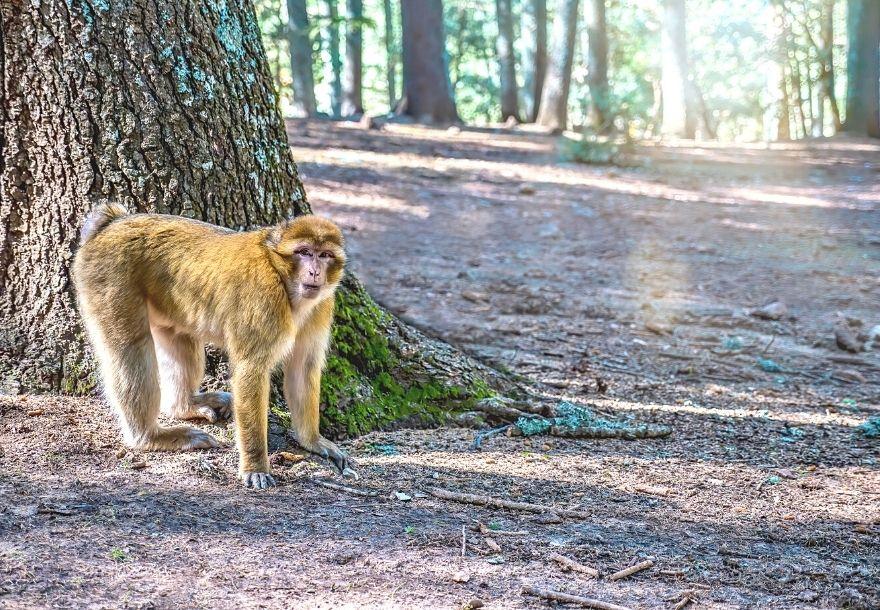 Cedar Forest Azrou